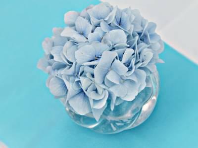 flower-2645633_640