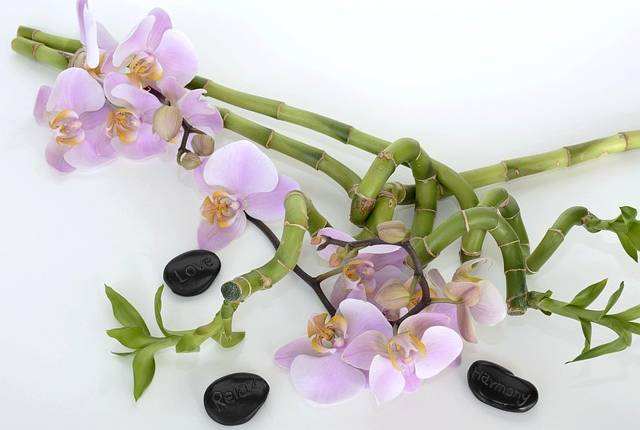 orchid-2115259_640